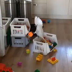 Parrot plays with my child's toolsYou can find Parrots and more on our website.Parrot plays with my child's tools Funny Birds, Cute Birds, Cute Funny Animals, Cute Baby Animals, Animals And Pets, Wild Animals, Beautiful Birds, Animals Beautiful, Vogel Gif