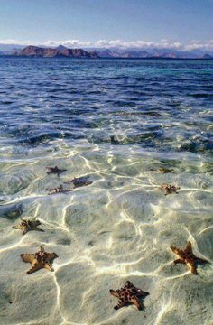 Starfish Beach, Bora Bora....the vacation of my dreams!