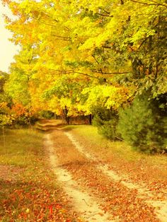 Love to hear the crunch of fallen leaves under bicycle tires... This bucolic lane is in Michigan. <> (bikes, bicycles, cycling, pathways, byways)