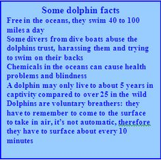 ☙ Dolphins ❧ facts