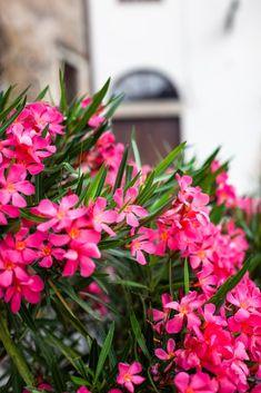 20 plantes qui poussent sans arrosage (ou presque) - M6 Deco.fr Outdoor Garden Bench, Patio, Rock Plants, Horticulture, Landscape Art, Pergola, Bouquet, Exterior, Projects To Try