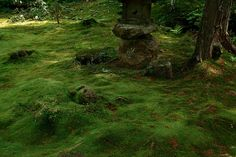 Early Summer in Green by hirox176, via Flickr
