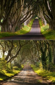Ireland makes me swoon lately and this morning I got even more enchanted with this dreamy and very unique stretch of the Bregagh Road near...