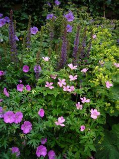 Beautiful Flowers Garden, Beautiful Gardens, Perennial Border Plants, Geranium Macrorrhizum, Farmhouse Garden, Garden Borders, Farm Gardens, Dream Garden, Geraniums