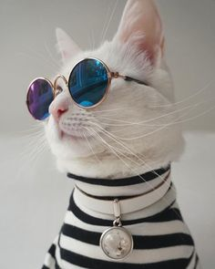 new Ideas funny cats sunglasses Beautiful Cats, Animals Beautiful, Kittens Cutest, Cats And Kittens, Siamese Cats, Big Cats, Cute Baby Animals, Funny Animals, Wild Animals