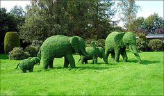 Elephant shaped hedges