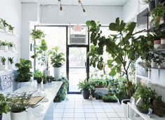 Manhattan store The Sill's diverse selection of plants, from fiddle-leaf fig trees to tiny tabletop succulent sets.