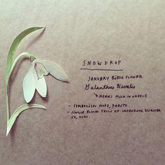 Snowdrop: January Birth flower #getwise2013