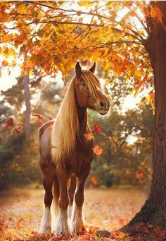 Cheval somptueux par la lumière de son environnement et ces couleurs