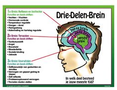 Je brein in 3 delen Coaching, Youth Worker, Visible Learning, Science Tools, Inspirational Articles, Brain Gym, School Lessons, Working With Children, Facebook Marketing