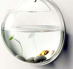 $49.99 Fish Bowl on the Wall