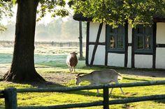 Polska na ludowo - Poznaj Polskę Poland Country, Country Farm, Farms Living, Polish, Farmers, Happy Life, Cottages, Animals, Culture