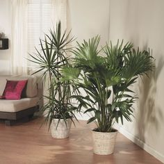 House With White Walls And Indoor Tropical Houseplants The Care Instructions For Tropical Houseplants Check more at http://www.wearefound.com/the-care-instructions-for-tropical-houseplants/