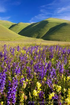 Field of wildflowers in Monti Sibillini National Park, Umbria, Italy Beautiful World, Beautiful Places, Beautiful Pictures, Landscape Photography, Travel Photography, Umbria Italy, Regions Of Italy, Belleza Natural, Italy Travel