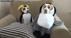 These dogs and those outfits. | 20 Things That Are Better When They're Together
