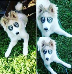 28 Doggos With Beautiful And Unique Markings That Will Mesmerize You - World's largest collection of cat memes and other animals Smiling Animals, Animals And Pets, Funny Animals, Cute Animals, Unusual Dog Breeds, Rare Dog Breeds, Cute Puppies, Dogs And Puppies, Adorable Dogs