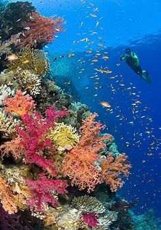 Beautiful colorful corals. Re-pinned by www.borabound.com
