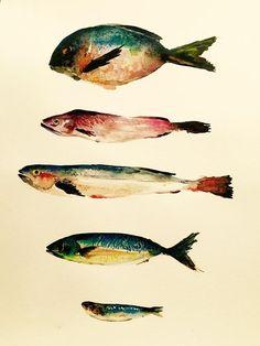 watercolor / fish