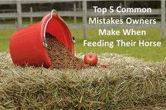 """Five Common Mistakes Made When Feeding A Horse"" There is a wealth of great information to be had in this article. I really am reconsidering getting a horse, now. I would love to have one, but the pasture will be cultivate with milking animals in mind, and I think a poor horse would get colic from it. I do not want to keep a horse in a stall, either, as that results in a whole host of other issues."