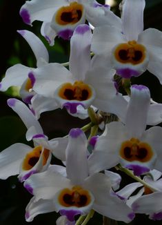 A blog about orchids written by the staff of the Fuqua Orchid Center.