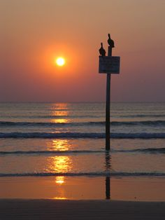 Two pelicans and a beautiful ocean sunrise in Daytona Beach ~ by Paul Bates