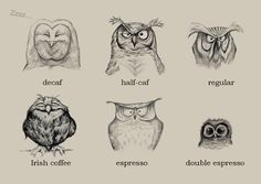 Double espresso, owl day, every day