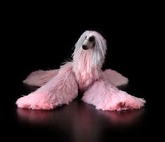 Collectibles Animals, afghan hound, cute plush toy, stuffed animals, miniature