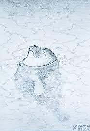 Kuvahaun tulos haulle seal drawings