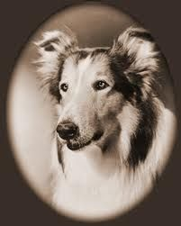 Grow up in the 50's, 60's or 70. Lassie...