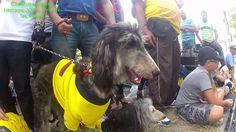 Caminata Canina Feria de Flores 2014, Tierragro The Originals, Youtube, Flowers, Youtubers, Youtube Movies