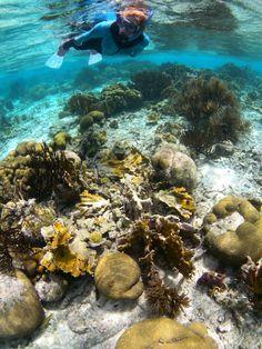 Bonaire Snorkeling
