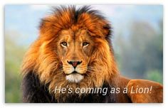 Hes coming as a Lion!
