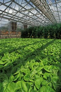 Hydroponics is the practice of growing plants without soil. Learn more about how hydroponics uses water as the nutrients for plants.