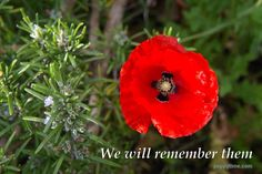 We Will Remember Them Lest We Forget, Great Love, Poppies, Bee, Christmas Ornaments, Holiday Decor, Animals, Inspiration, November
