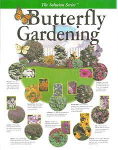 Butterfly Gardening Plan - create your own garden with this key map filled with the right plant combinations that attract butterflies Hummingbird Garden, My Secret Garden, Lawn And Garden, Terrace Garden, Garden Hammock, Moss Garden, Garden Table, Garden Spaces, Spring Garden