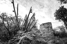 Adderley's Plantation ruins   Long Island Bahamas derekford.com Long Island Bahamas, Photography, Painting, Outdoor, Outdoors, Photograph, Fotografie, Painting Art, Photoshoot