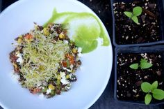 SUPERFOOD SERIES: Quinoa