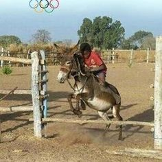 The true Olympic sport:  Donkey Jumping