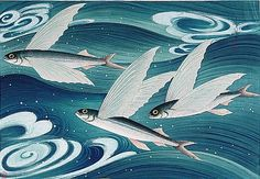 I just saw a school of flying fish off my back lanai...they can fly for 150 feet, however if conditions are optimum, they can glide up to 1,000 feet...way cool...