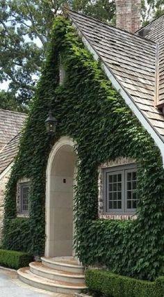 original vertical garden: Boston Ivy and clipped Boxwood, Howard Design Studio