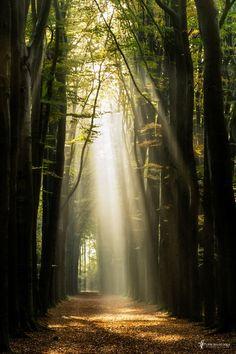 Be I am - tree forest landscape sun nature sunbeam Beautiful World, Beautiful Places, Beautiful Pictures, Terre Nature, Natur Wallpaper, Landscape Photography, Nature Photography, Travel Photography, Natures Path