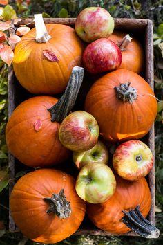 "beyond–vagabond: ""A Little Autumn Charm…. """