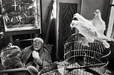 This is one of my favorite photographs of all time. Matisse by Henri Cartier-Bresson
