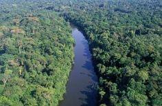 floresta amazonica - MySearch