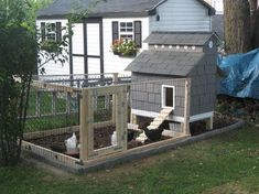 I'd love to have chickens in my backyard.