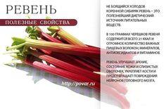 Овощи и их полезные свойства. » Новости Казахстана, все последние новости России и новости мира, новость дня