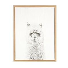 """DSOV 'Hairy Alpaca Black and White Portrait' by Simon Te Tai Framed Photographic Print on Wrapped Canvas Frame Color: Natural, Size: 24"""" H x 18"""" W ..."""