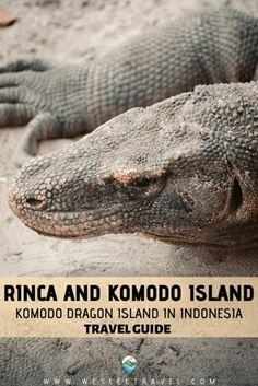 Complete travel guide to the two Komodo Dragon Islands in Indonesia - Rinca and Komodo Islands. How to get here and where to see Komodo Dragons. Group Travel, New Travel, Ultimate Travel, Travel List, Komodo Dragons, Komodo Island, Go Outdoors, Adventure Activities, Amazing Destinations