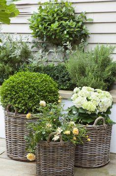 kleiner-garten-gestaltung-shabby-look-korbe-rosen-hortensien-buchsbaum-kugel