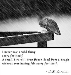 I never saw a wild thing sorry for itself. | D.H. Lawrence